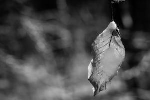 Vergänglichekeit motivfinderbraunschweig-1